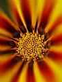 Picture Title - sun flower