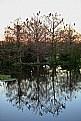 Picture Title - Cormorant Reflections