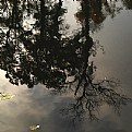 Picture Title - the pond