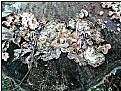 Picture Title - mushroom garden