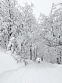 Picture Title - She returned to winter