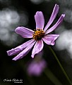 Picture Title - Flower - 026
