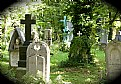 Picture Title - Mystifying Cemetery