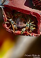 Picture Title - Wasps