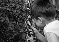 Picture Title - Little explorer