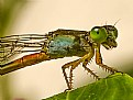 Picture Title - Damselfly