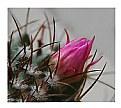 Picture Title - cactus