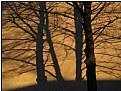 Picture Title - shadow trees
