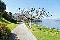 Picture Title - Lago di Como (3): Villa Melzi