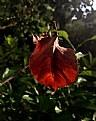 Picture Title - broken leaf