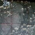 blossom-girl