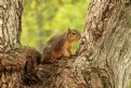 "Picture Title - ""Squirrel in Tree"""