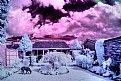 Picture Title - Luke - Infra Red