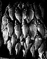 Picture Title - organized fishes