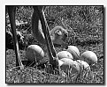 Picture Title - eggs