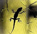 Picture Title - crocodile at window