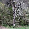Picture Title - Marche tree