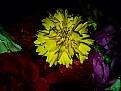 Picture Title - q flower