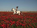 Picture Title - Poppy Rider 1