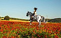 Picture Title - Poppy Rider 2
