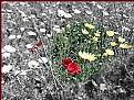 Picture Title - Rosso relativo