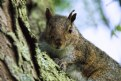 Picture Title - One Tough Squirrel