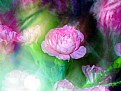 Picture Title - Colorful Carnations
