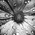 Picture Title - Water Drops
