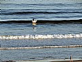 Picture Title - Surfing