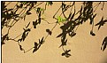 Picture Title - shadow leaves
