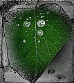 Picture Title - Lightning in a leaf