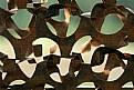Picture Title - Bird Blind Fairbanks