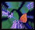 Picture Title - Lavender Blue