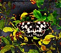 Picture Title - Butterfly in oils