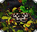 Picture Title - Canvas Butterfly