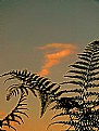 Picture Title - Fern at Sunset