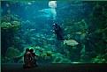 Picture Title - Aquarium