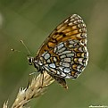 Picture Title - ...a buttefly...