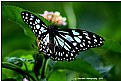 Picture Title - Butterfly -3
