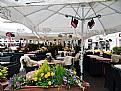 Picture Title - Street &  Restaurant
