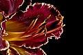 purple lily up close..