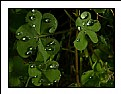 Picture Title - Drops and Light