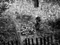 Picture Title - stillness