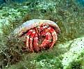 Picture Title - Hermit crab
