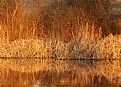 Picture Title - Grasses Reflections
