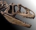Picture Title - T-rex