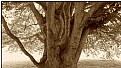 the tattooed tree