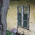 Picture Title - backyard-window