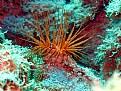 Picture Title - sea anemon