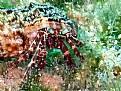 Picture Title - mini hermit crab